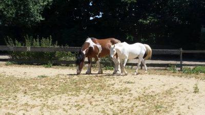 opstellinen met paarden - systemisch werken met paarden