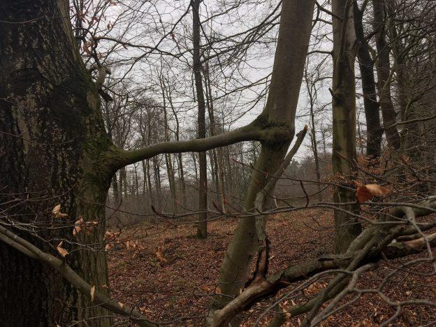 Stress op het werk - Vechten -Vluchten of Verbinden |Familieopstellingen Limburg
